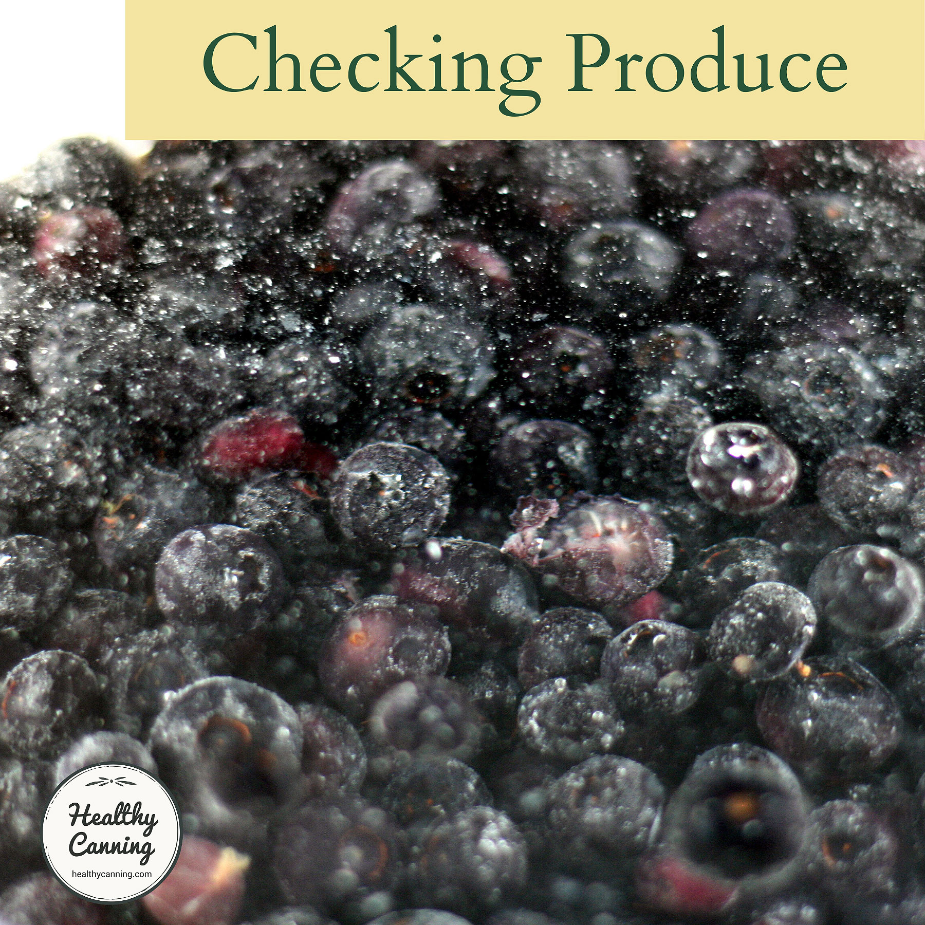 checked blueberries in cold water
