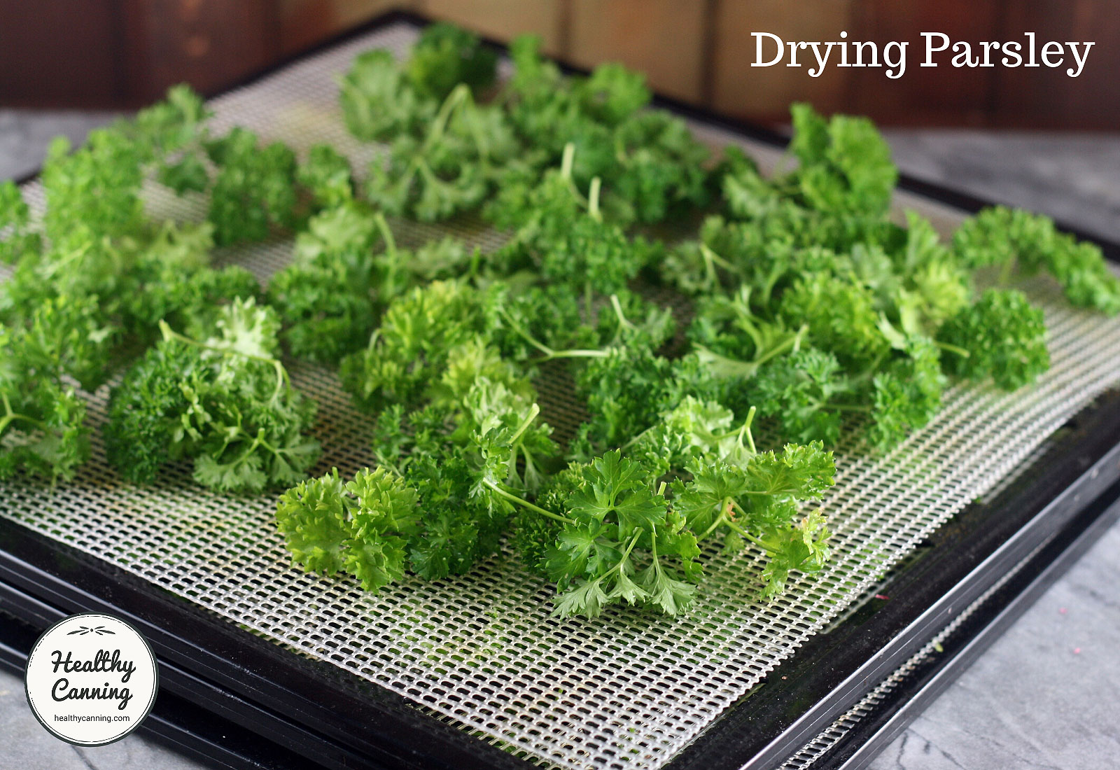 Drying curly parsley