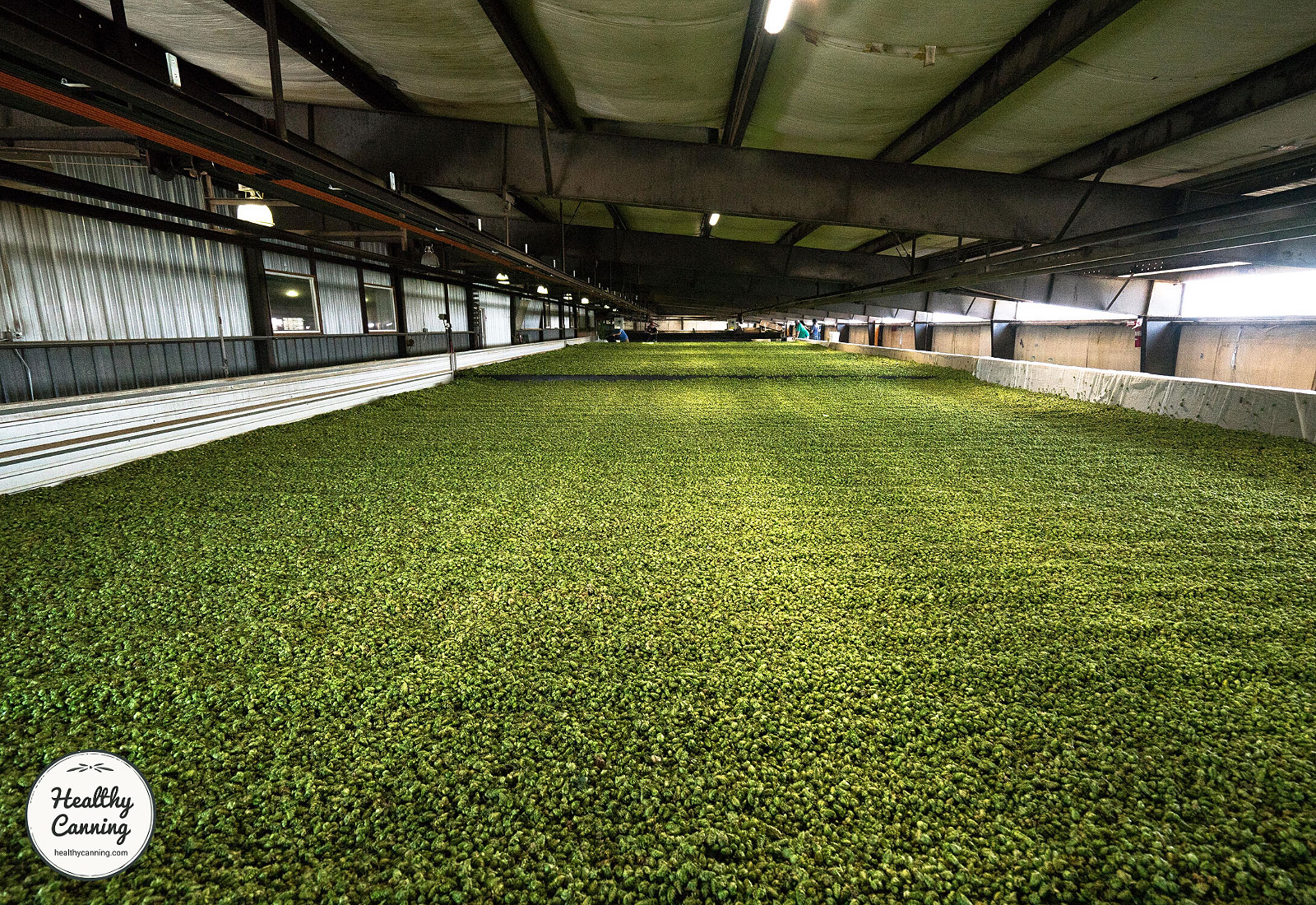 Large hop drying room
