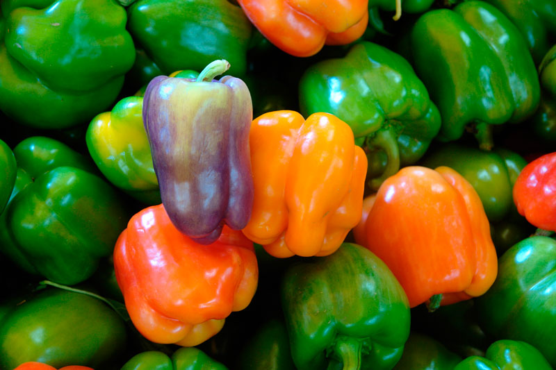 Various coloured bell peppers. LoveToTakePhotos / Pixabay.com / 2015 / CC0 1.0