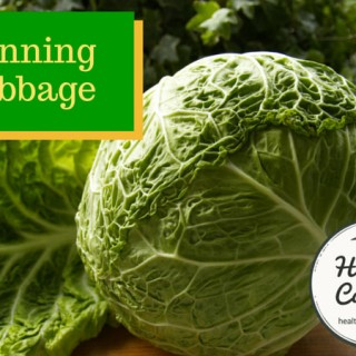 canning-cabbage-002